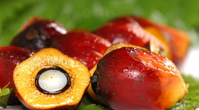 Understanding: Palm Oil