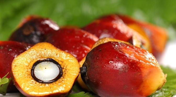 Understanding: Palm Oil