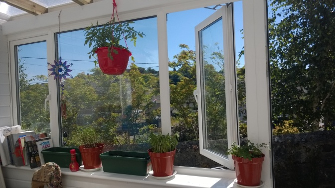 Lazy Indoor Gardening for the non green-fingered
