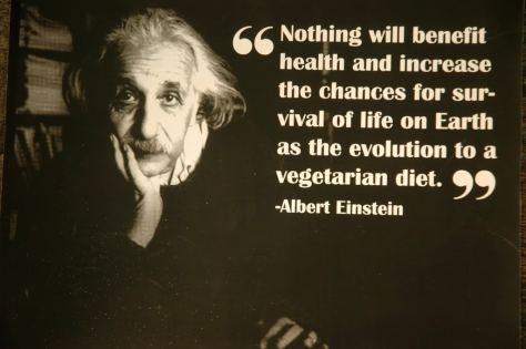 Albert einstein vegetarian quote 3