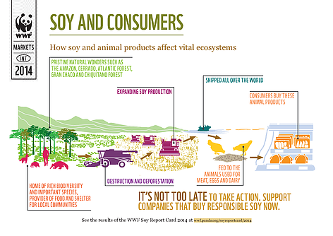 soy_and_consumers_infographic_471807