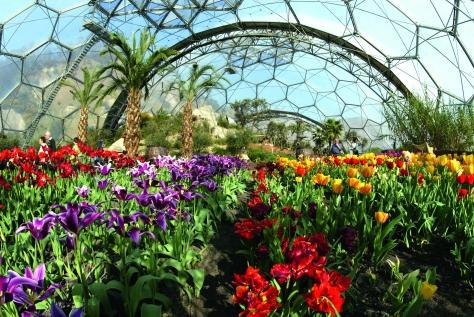 Mediterranean-Biome-Tulips