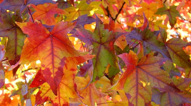5 Decoration ideas using Autumn Leaves