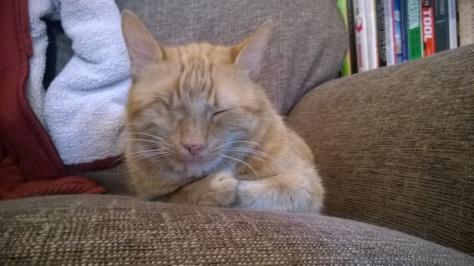 cat keep you warm
