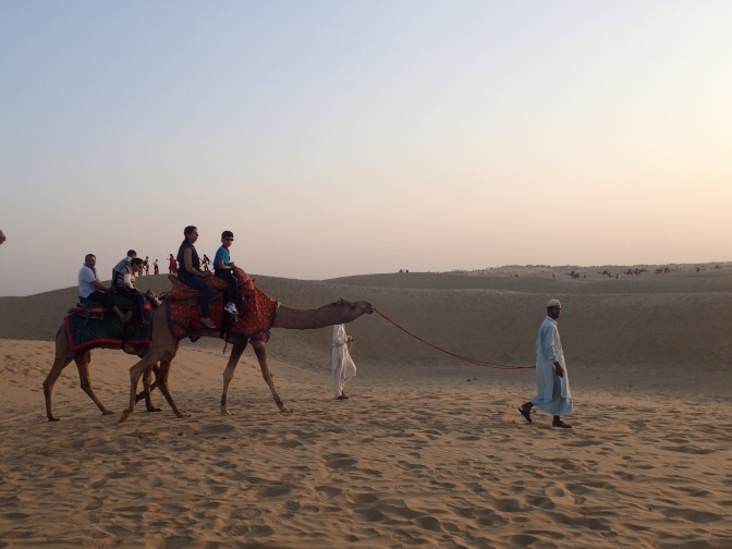 The cruel case of the Jaisalmer Camel