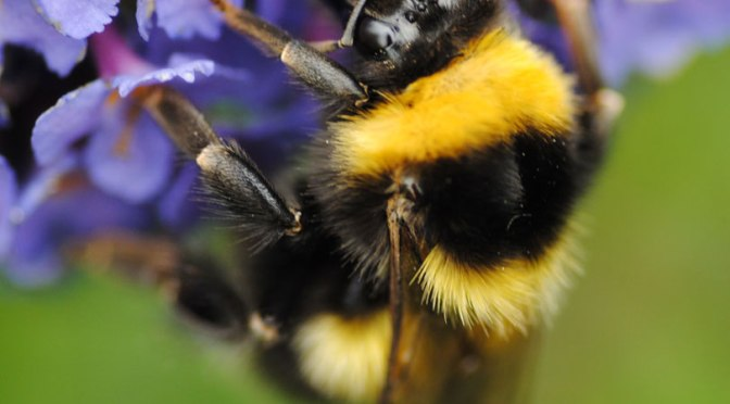 How to Garden for Bees