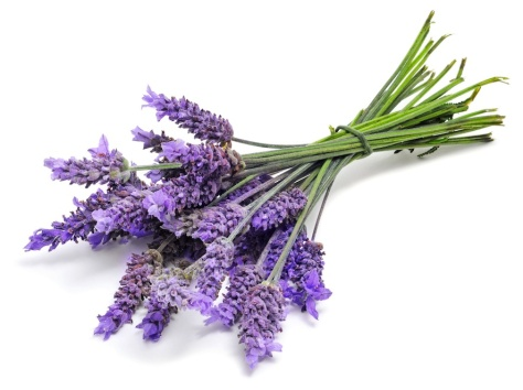 Source: http://www.gerlindenaturals.com/lavender-linen-spray.html