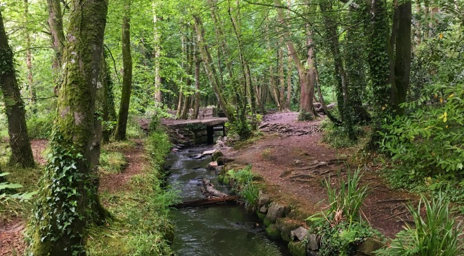 How to go Forest Bathing